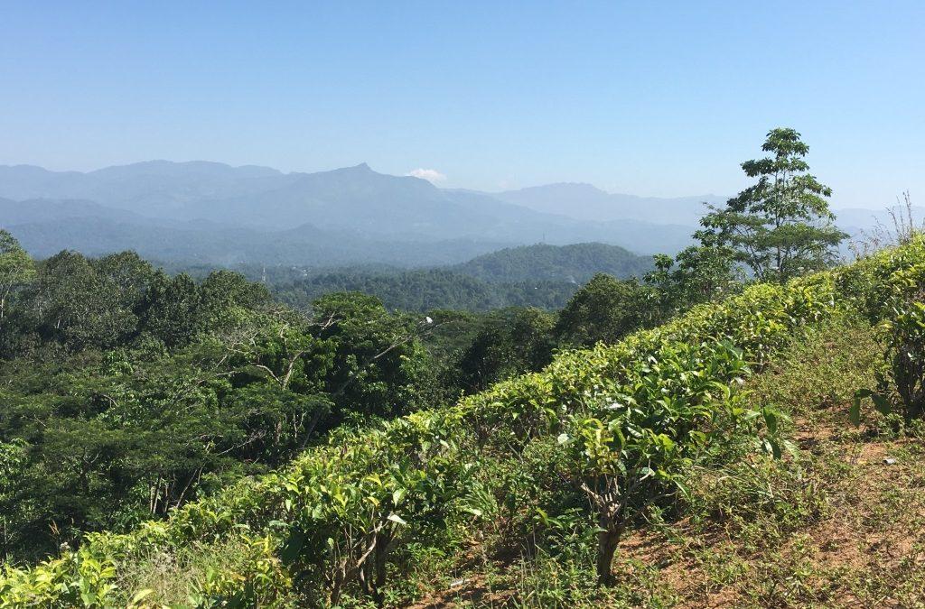 Шри-Ланка. Часть 1. Мы провели здесь месяц своей жизни…